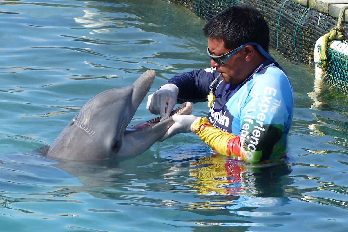 A dolphin with rake marks and a discolored rostrum gets medical treatment at Dolphin Discovery's Cancun Isla-Mujeres location. Credit: Empty the Tanks/Dolphin Project