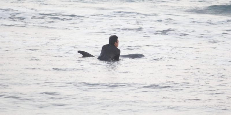 Dolphin Project and JAAN help stranded pilot whale return to sea, Bali, Indonesia. Credit: DolphinProject.com