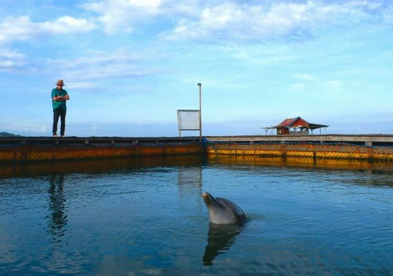 Ric O'Barry and dolphin Rambo, Bali, Indonesia