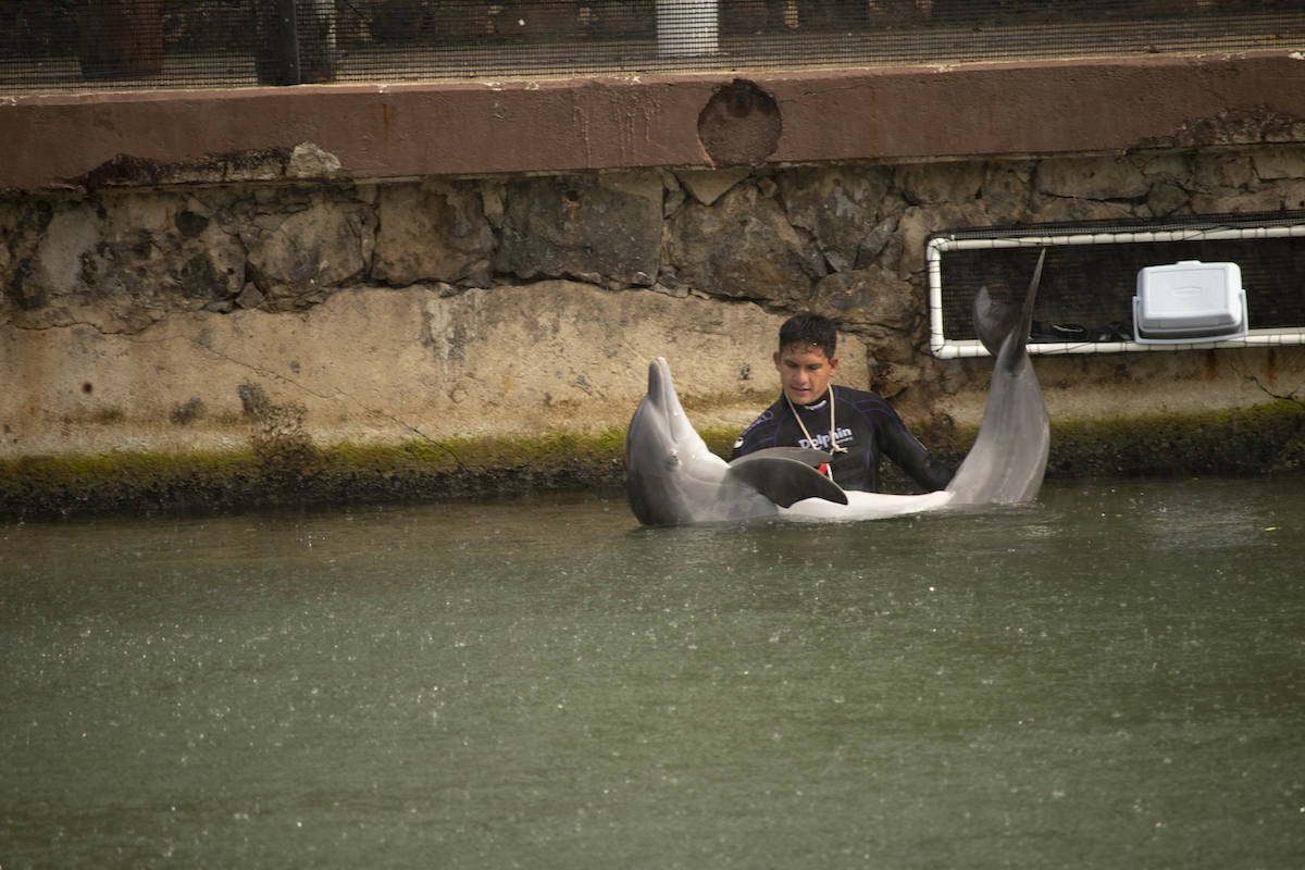 A trainer at Dolphin Discovery's Playa del Carmen location is seen handling a dolphin in an inappropriate way. Credit: Empty the Tanks/Dolphin Project