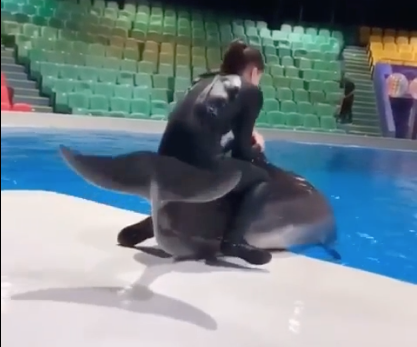 "Trainer ""rides"" a dolphin from concrete slide-out into the pool at Dubai Dolphinarium."