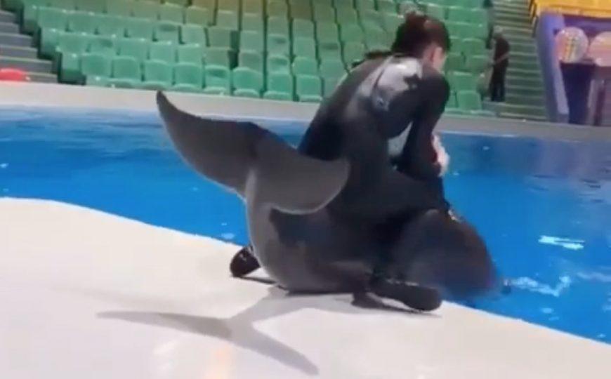 Trainer rides dolphin Dubai Dolphinarium