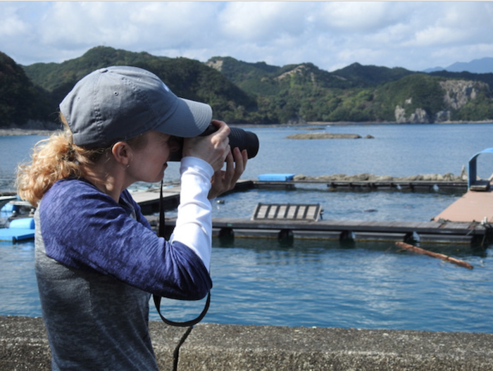 Volunteer as a Dolphin Project Cove Monitor