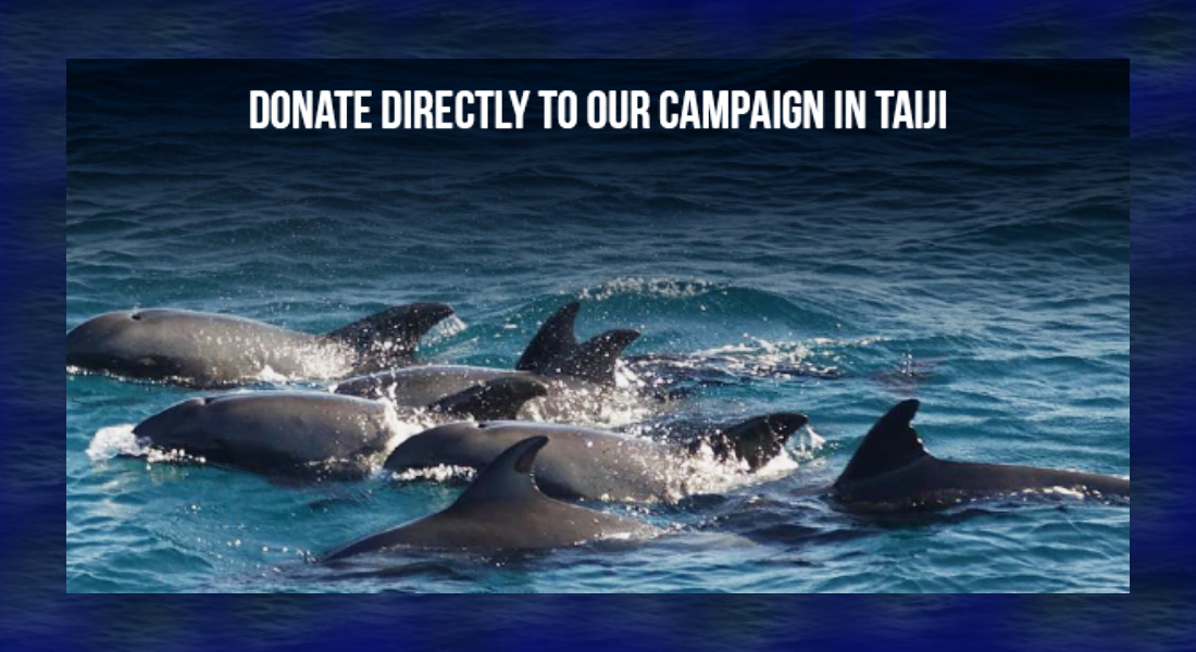Donate directly to our campaign in Taiji, Japan