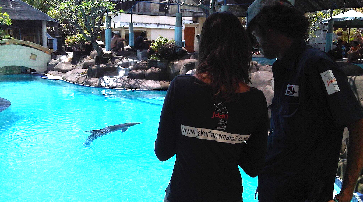 Lincoln O'Barry and Femke den Haas launched our Free Bali Dolphins campaign ten years ago, when we first discovered dolphins languishing in a small pool at the Melka Hotel, Bali, Indonesia.