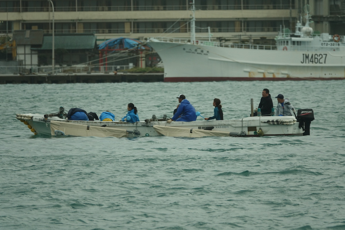 Transfer of captive dolphins in the neighboring town of Nachikatsuura, Japan.