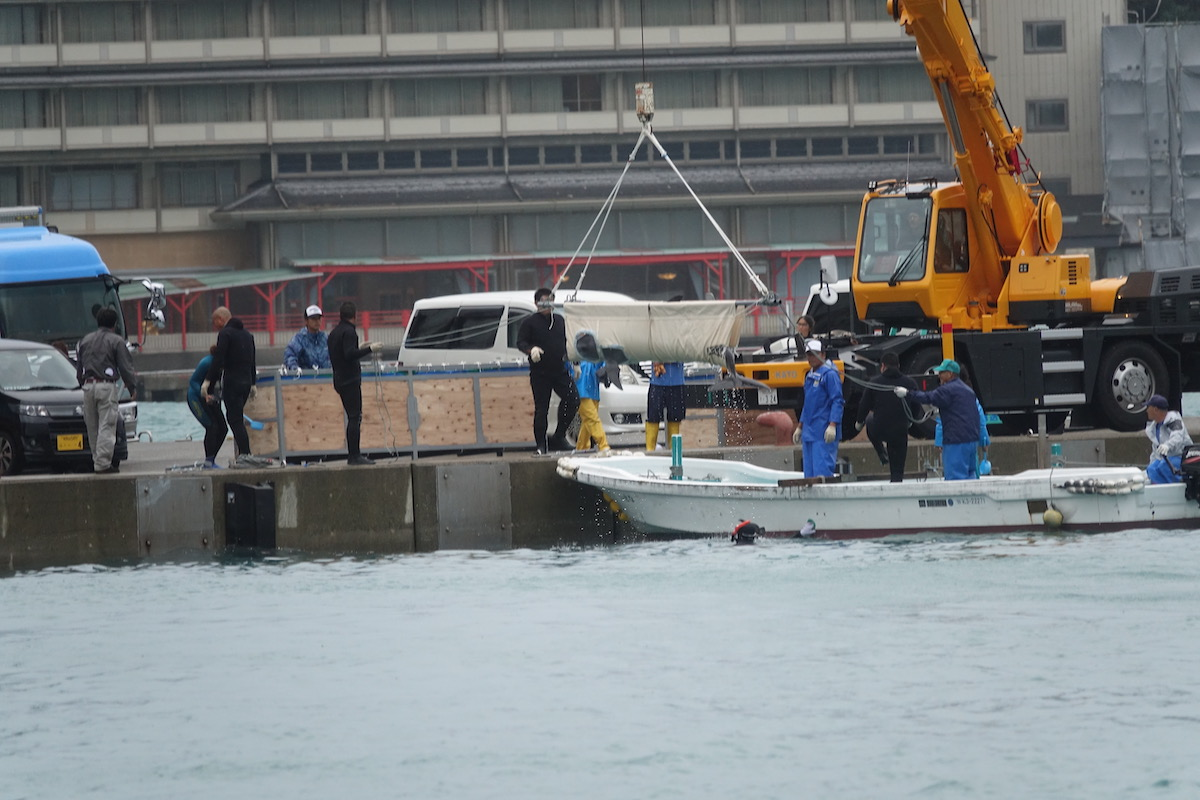 Transfer of captive dolphins in the neighboring town of Nachikatsuura, Japan