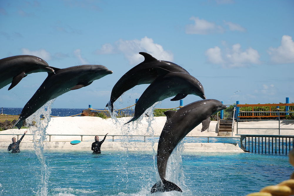 Ironic that performing dolphins at Sea Life Park Hawaii are just steps from the ocean, where they should be roaming, wild and free!