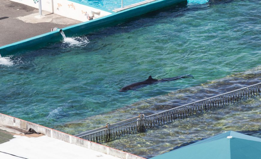 Kina at Sea Life Park, Hawaii.