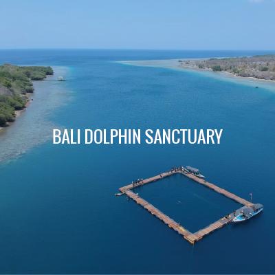 bali dolphin sanctuary
