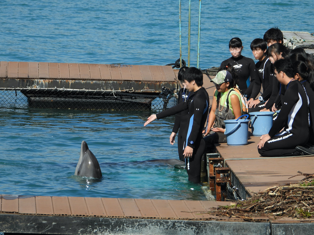 Dolphin trainers teach trainees how to command captive dolphins, Taiji, Japan.