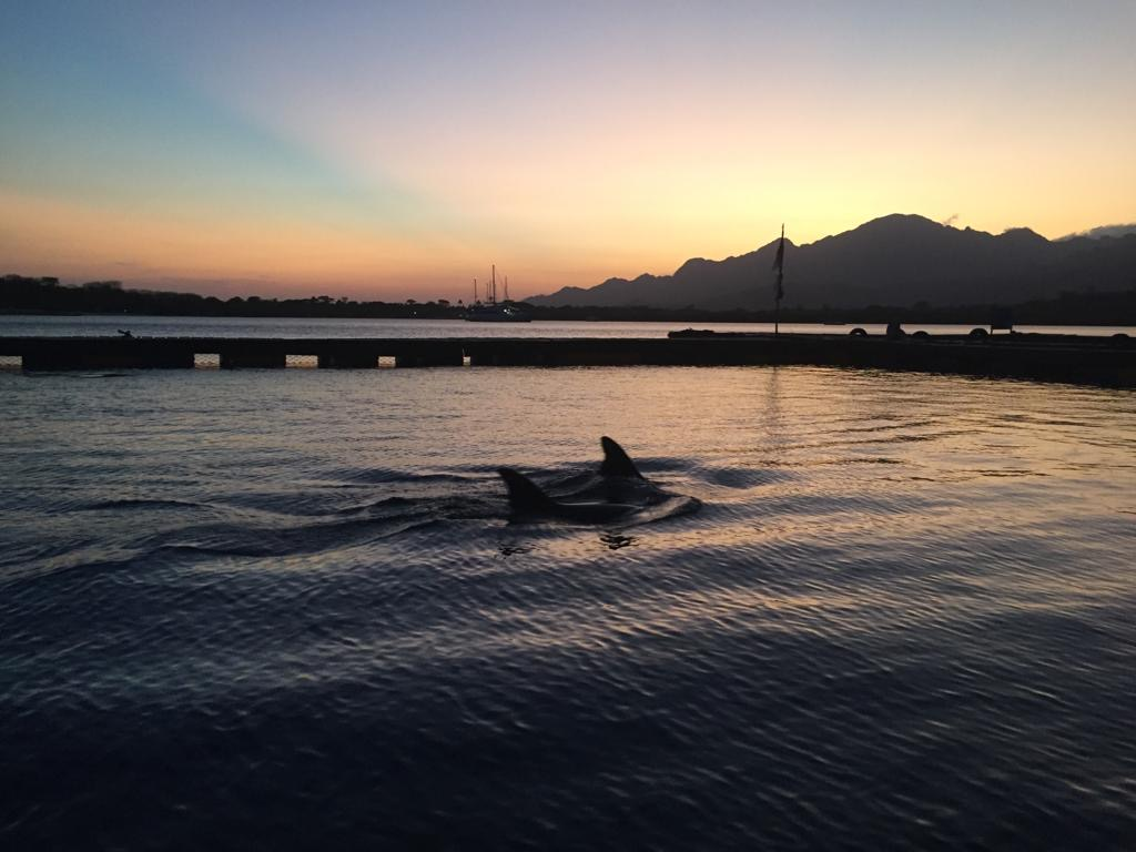 Dolphins at the Bali Dolphin Sanctuary will be able to live a life of peace and dignity. Credit: DolphinProject.com