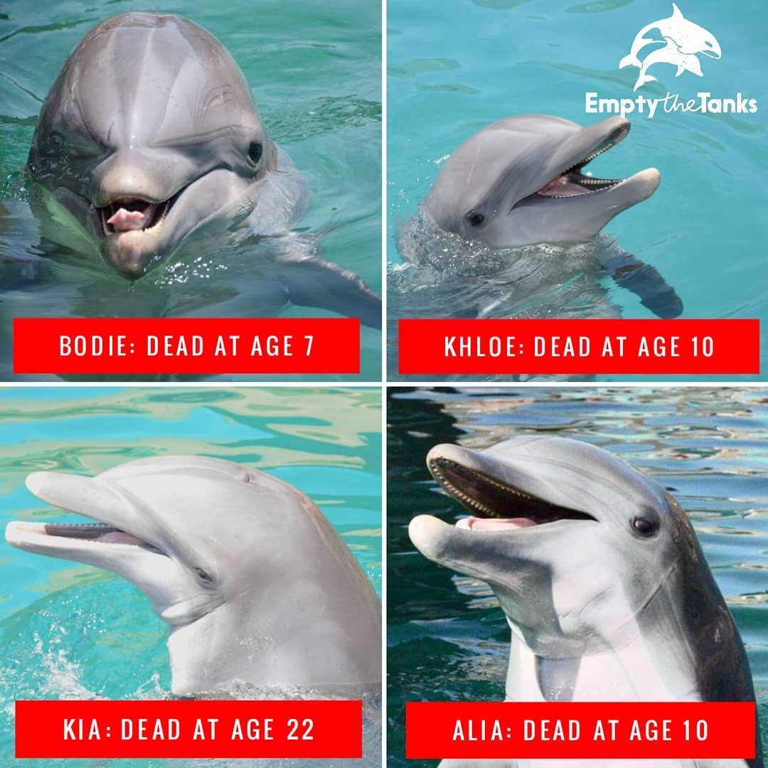 Four dolphins died at Dolphinaris Arizona. The facility closed in 2019.