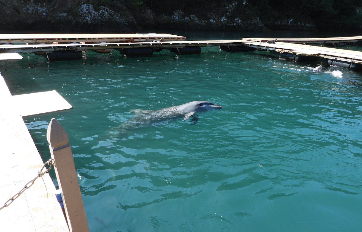 """""""Life"""" in captivity is no life at all, Taiji Whale Museum, Japan"""