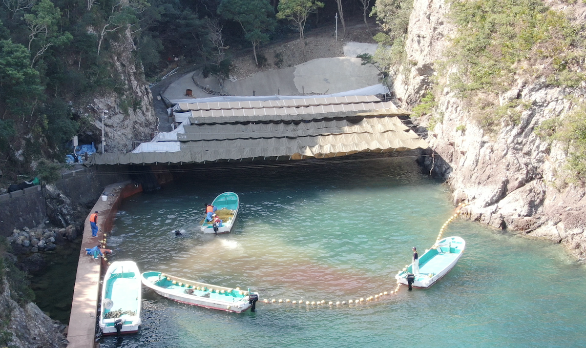 Exclusive: Drone Footage of Taiji's Dolphin Slaughters
