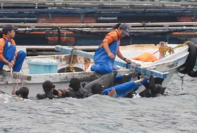 Trainer physically subdues captive bottlenose dolphin, Taiji, Japan