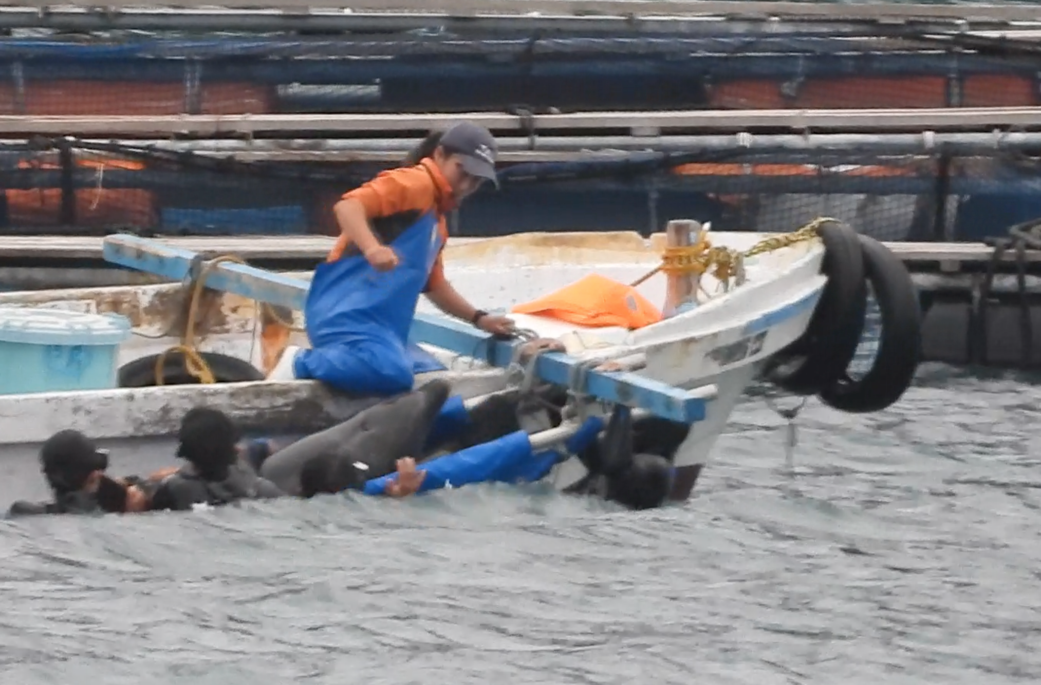 Trainer slams knee into captive bottlenose dolphin's head, Taiji, Japan