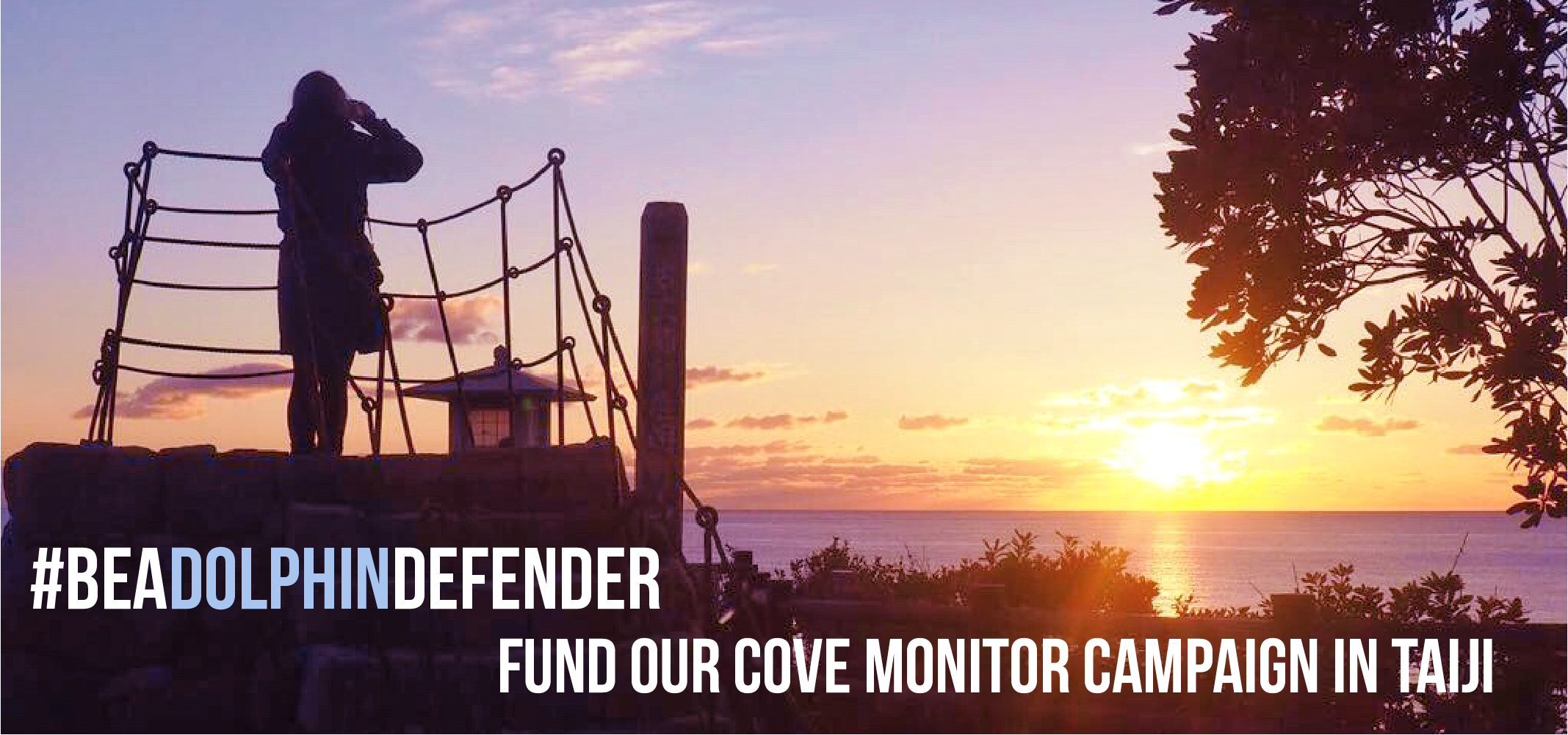 donate to cove monitor campaign taiji dolphin project