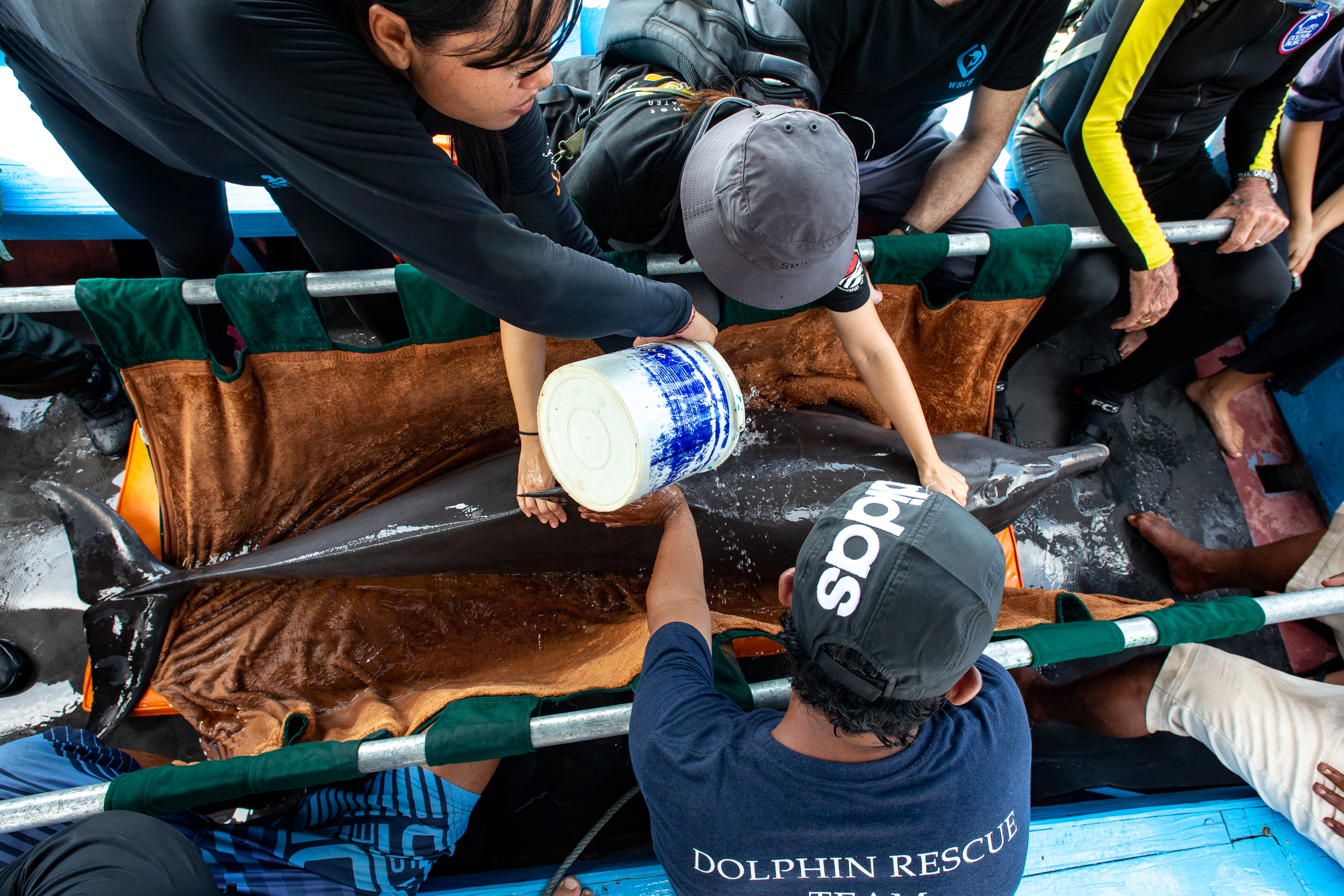In transit to the Bali Dolphin Sanctuary, Rocky and Rambo's comfort and well-being are ensured by our team, Bali, Indonesia. Credit: DolphinProject/Tim Calver
