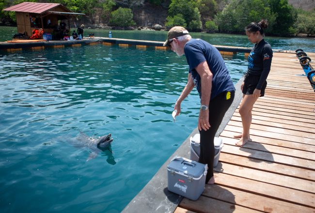 Ric O'Barry, Founder/Director of Dolphin Project feeds Rocky and Rambo, Bali Dolphin Sanctuary, Indonesia. Credit: DolphinProject.com/Tim Calver