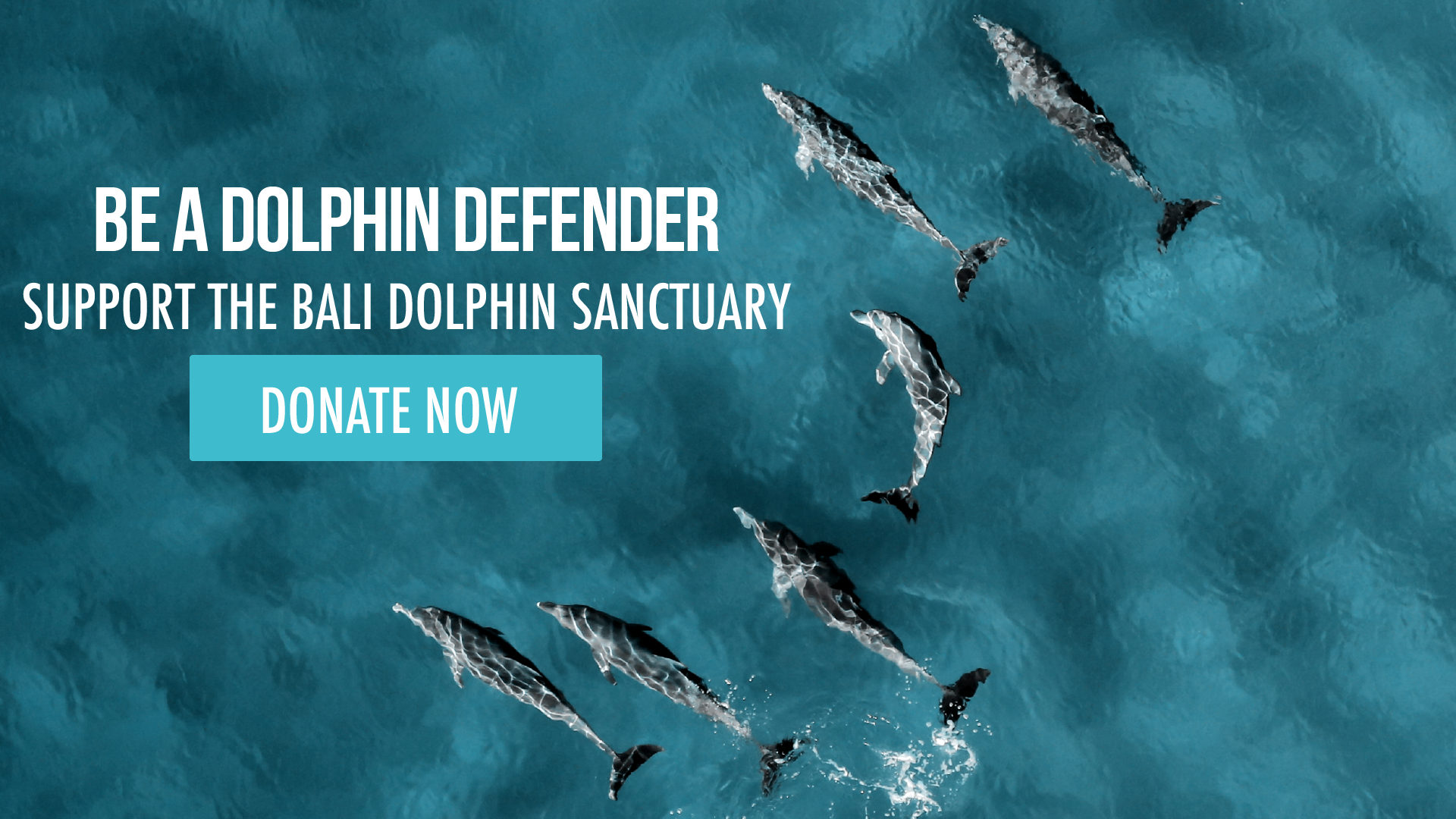 Be a Dolphin Defender and Donate Now to the Bali Dolphin Sanctuary
