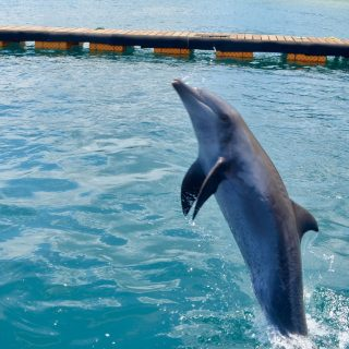 Jumping for joy at Bali Dolphin Sanctuary, Bali Indonesia