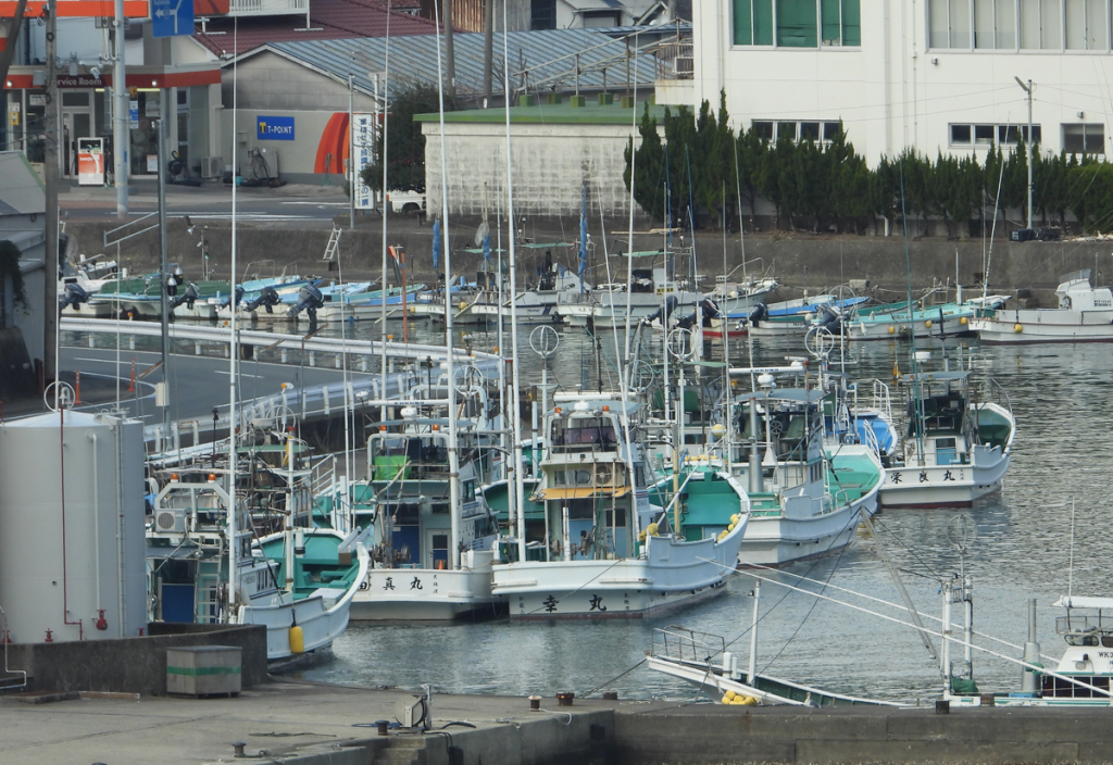 Dolphin hunting boats docked in Tajij harbor