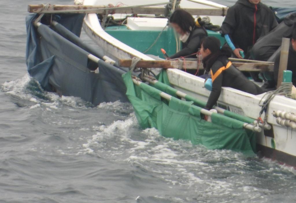 Bottlenose dolphins in slings