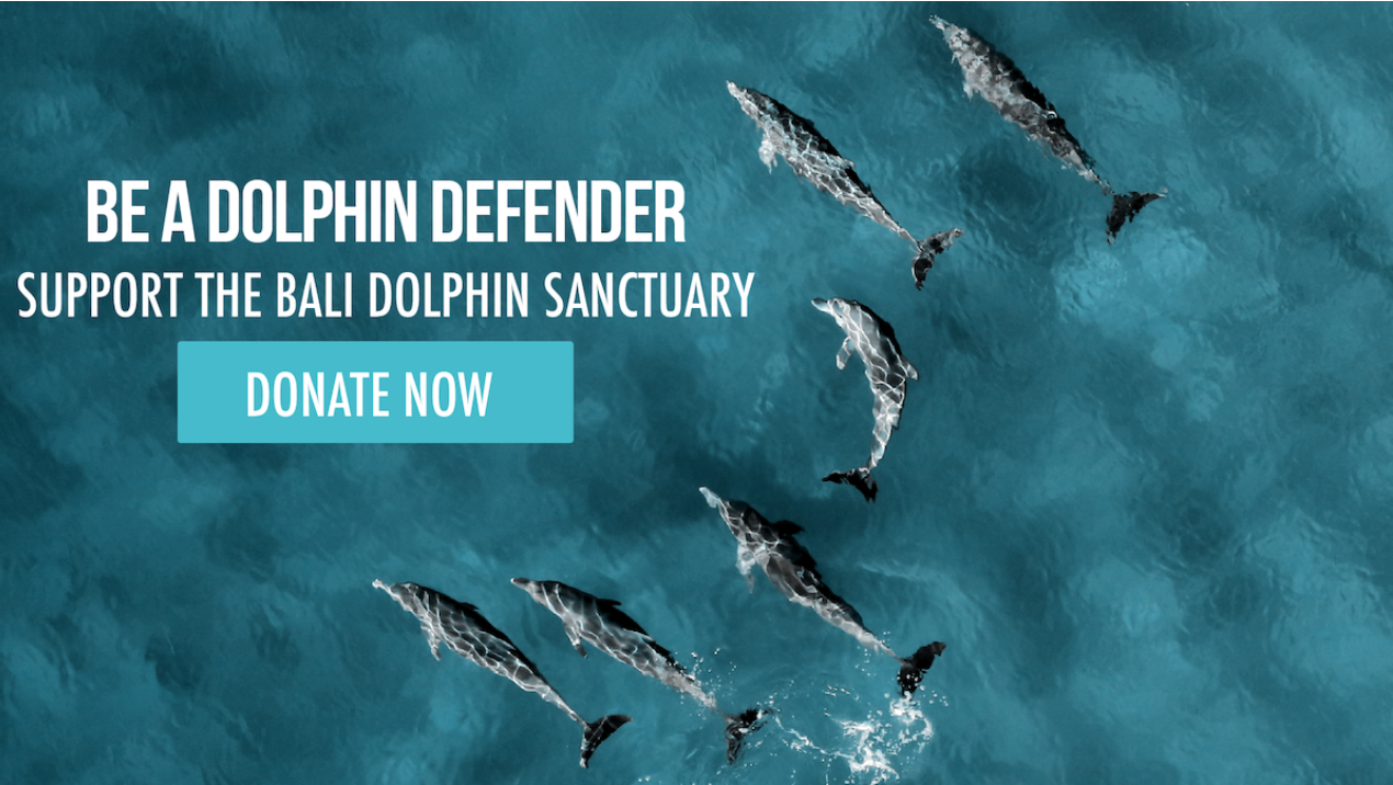 Support the Bali Dolphin Sanctuary