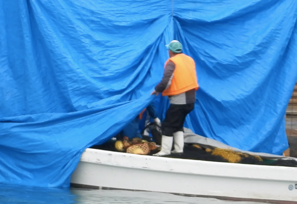 Dolphin hunter takes body of dolphin killed in storm