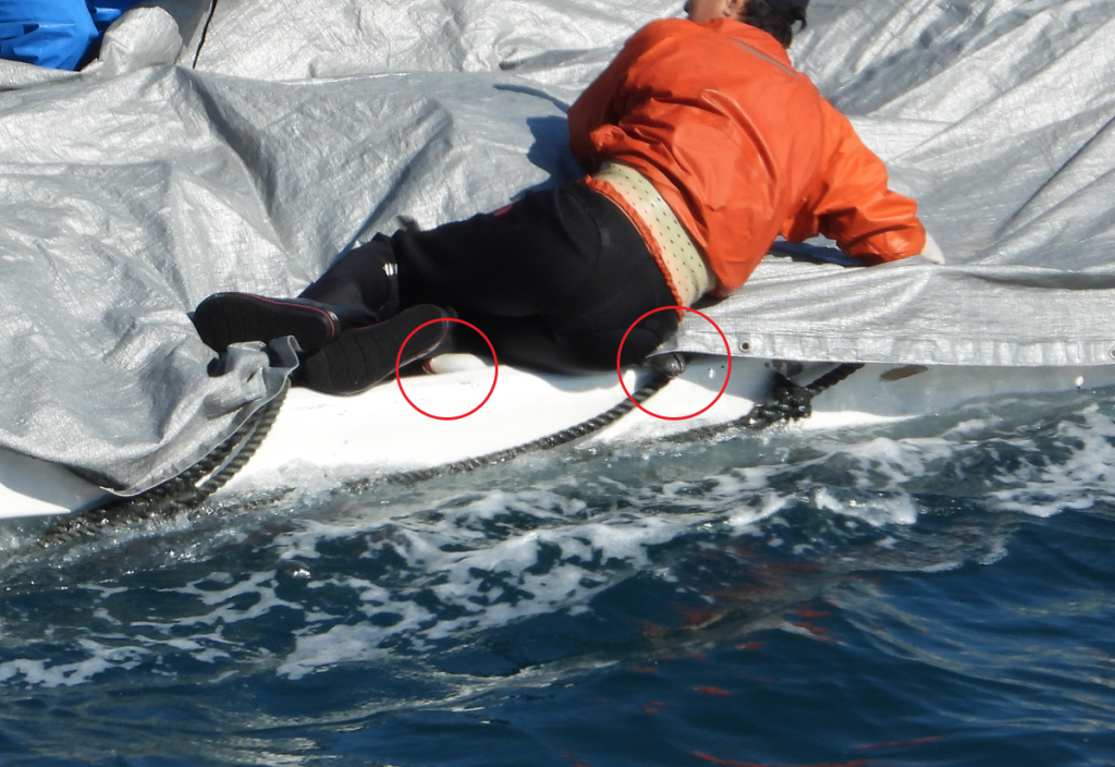 Slaughtered striped dolphins in skiff