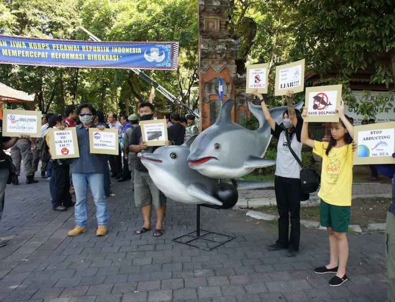 Local activists protest against Indonesia's cruel traveling dolphin circus.