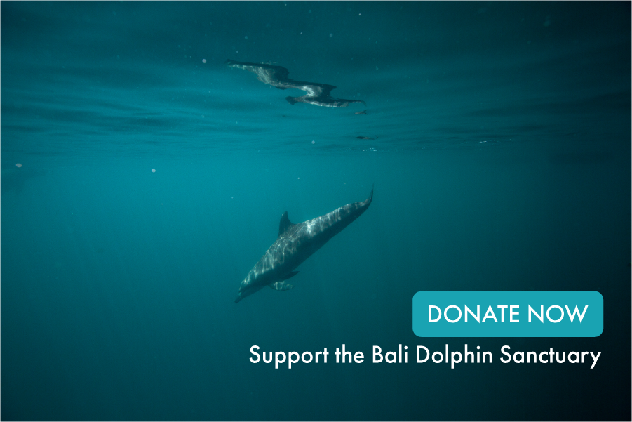 Donate now and support the Bali Dolphin Sanctuary