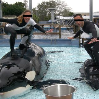 SeaWorld trainers stand on captive orcas