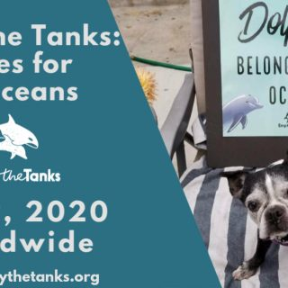 Empty the Tanks Event: Selfies for Cetaceans