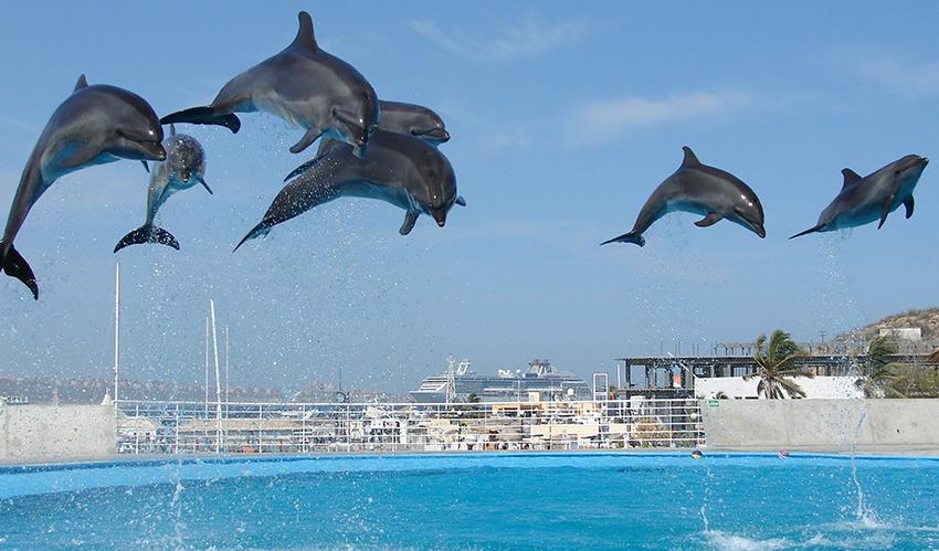Dolphin show jump