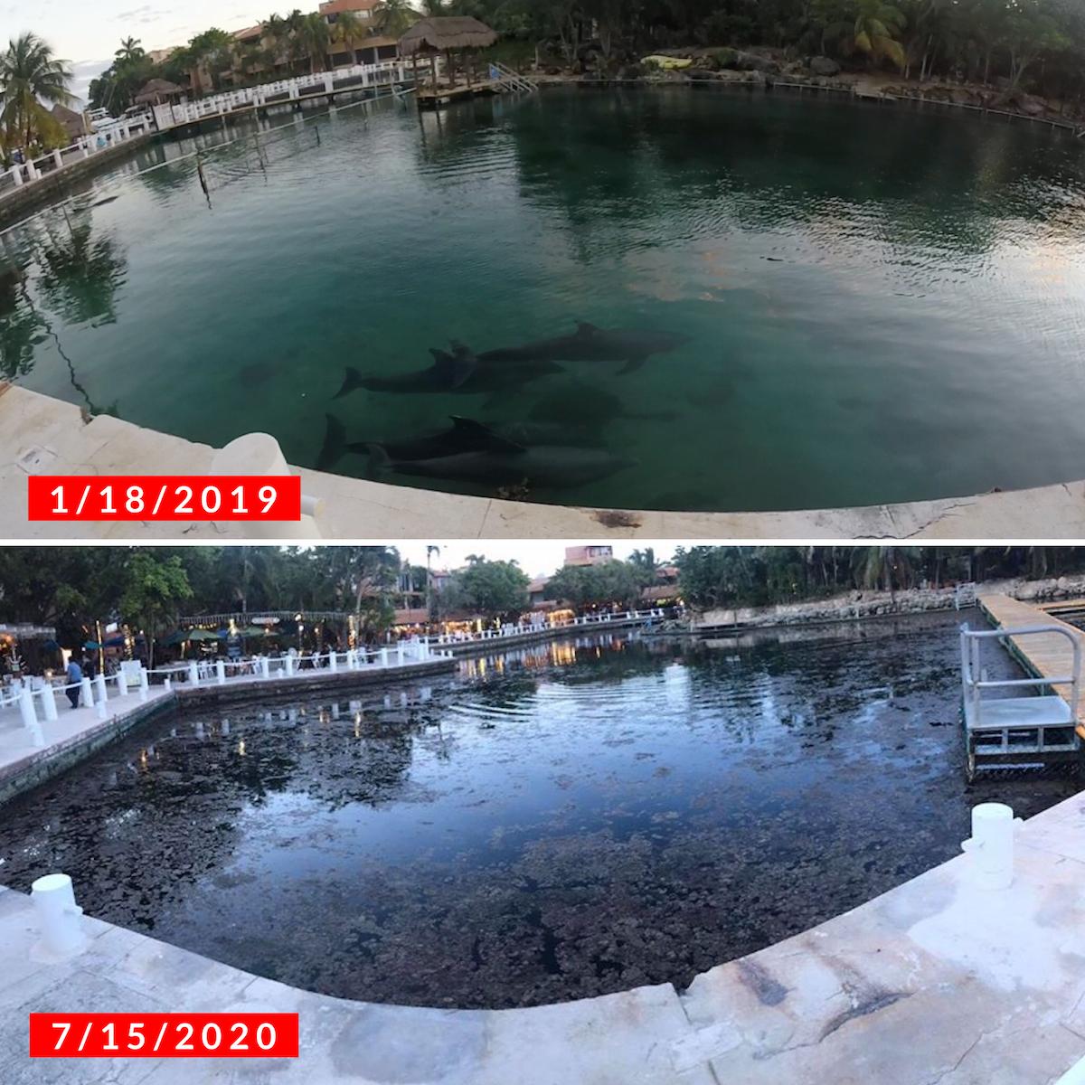 Réservoirs de dauphins à Dolphin Discovery Riviera Maya.