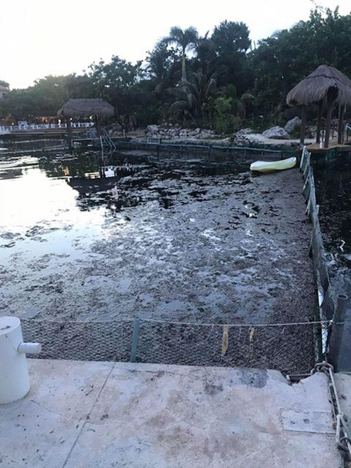 Algues remplies d'eau dans des réservoirs de dauphins à Dolphin Discovery au Mexique.