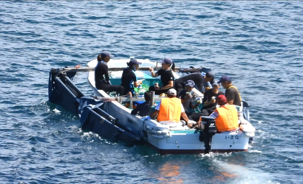 Four dolphins are taken captive in the first drive of the 2020/21 dolphin hunting season, Taiji, Japan.