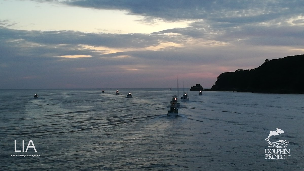 Hunting boats head out to sea in search of dolphin pods, Taiji, Japan