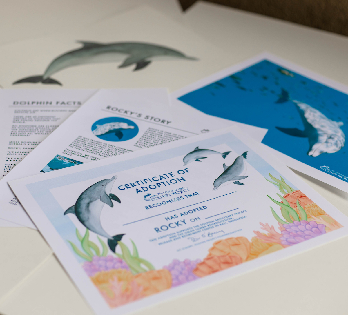 Rocky adopt a dolphin package